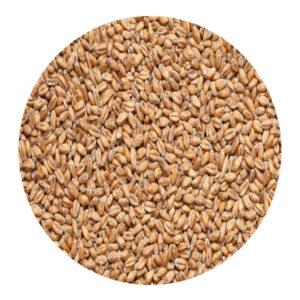 Солод «Пшеничный» Курск 1 кг 01